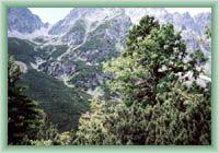 Mięguszowiecka Dolina